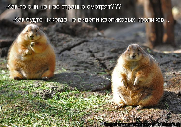 Котоматрица: -Как будто никогда не видели карликовых кроликов.... -Как-то они на нас странно смотрят???