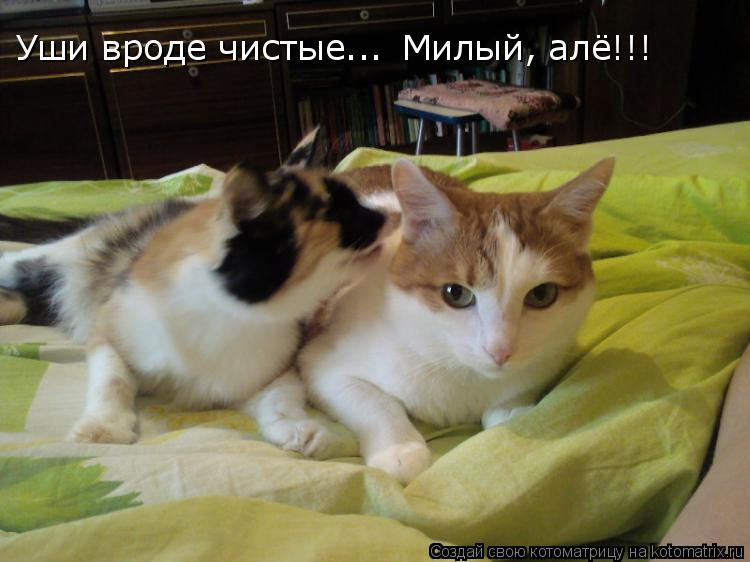 Котоматрица: Уши вроде чистые... Милый, алё!!!
