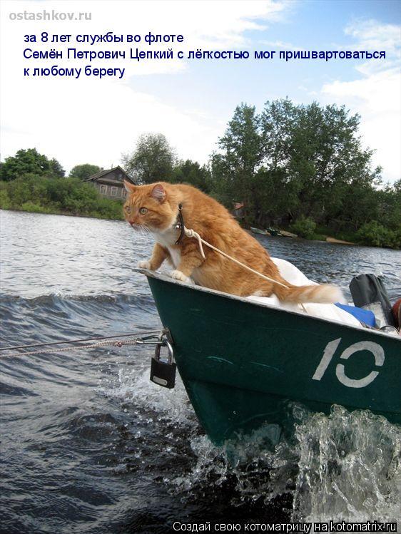 Котоматрица: за 8 лет службы во флоте  Семён Петрович Цепкий с лёгкостью мог пришвартоваться к любому берегу