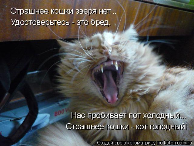 Котоматрица: Страшнее кошки зверя нет... Удостоверьтесь - это бред. Нас пробивает пот холодный... Страшнее кошки - кот голодный!