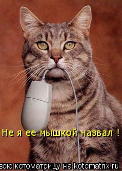 Котоматрица: Не я ее мышкой назвал !