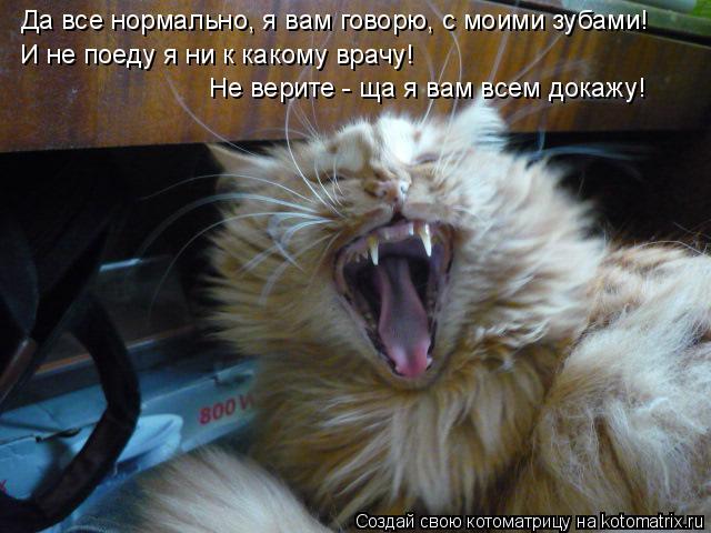 Котоматрица: Да все нормально, я вам говорю, с моими зубами! И не поеду я ни к какому врачу! Не верите - ща я вам всем докажу!