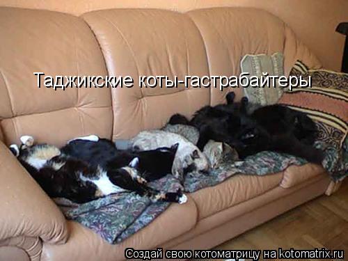 Котоматрица: Таджикские коты-гастрабайтеры