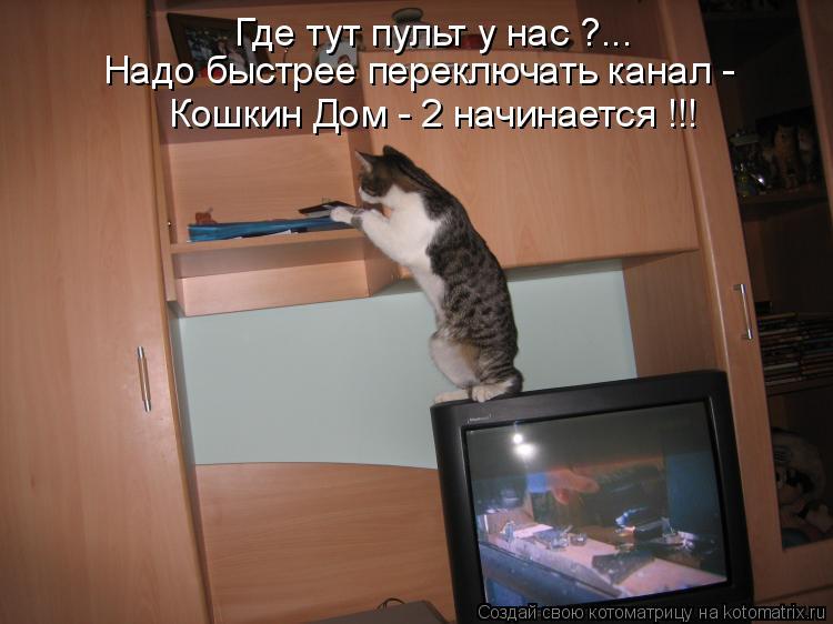 Котоматрица: Где тут пульт у нас ?... Надо быстрее переключать канал -  Кошкин Дом - 2 начинается !!!