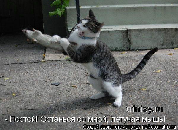 Котоматрица: - Постой! Останься со мной, летучая мышь!