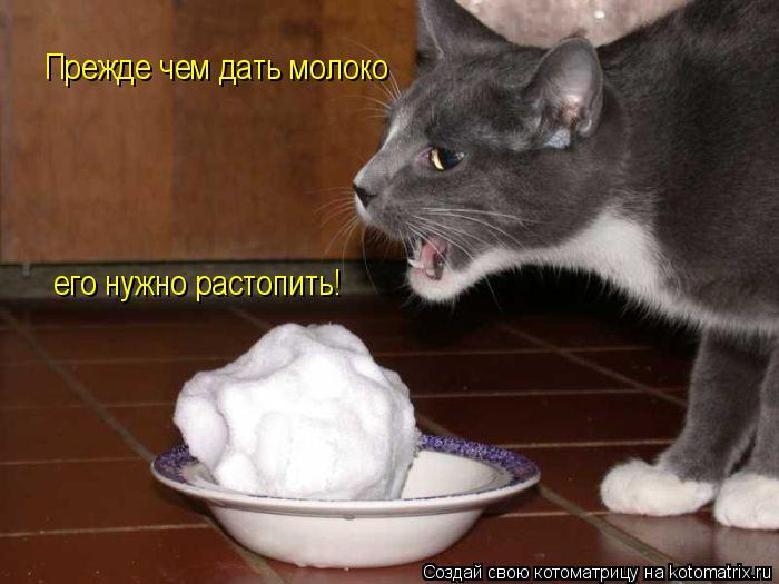 Котоматрица: Прежде чем дать молоко его нужно растопить!