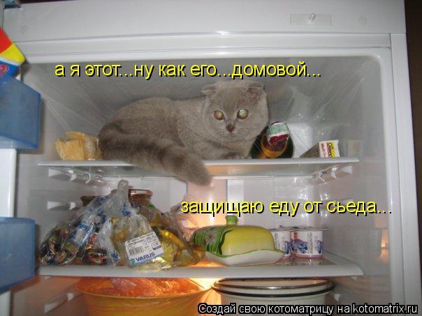 Котоматрица: а я этот...ну как его...домовой... защищаю еду от сьеда...