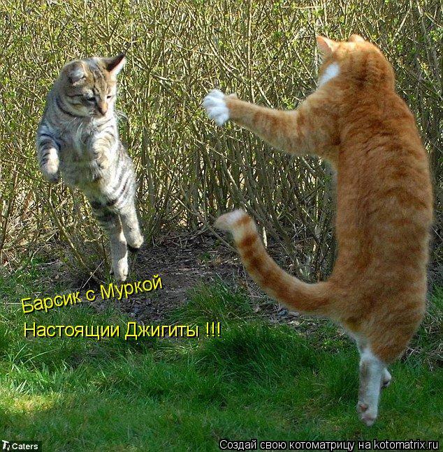 Котоматрица: Барсик с Муркой Настоящии Джигиты !!!