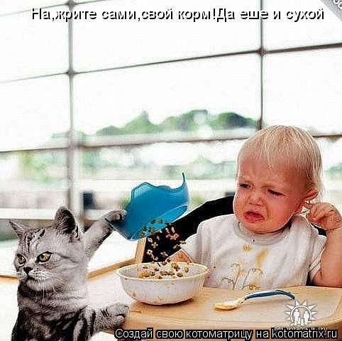 Котоматрица: На,жрите сами,свой корм!Да еше и сухой