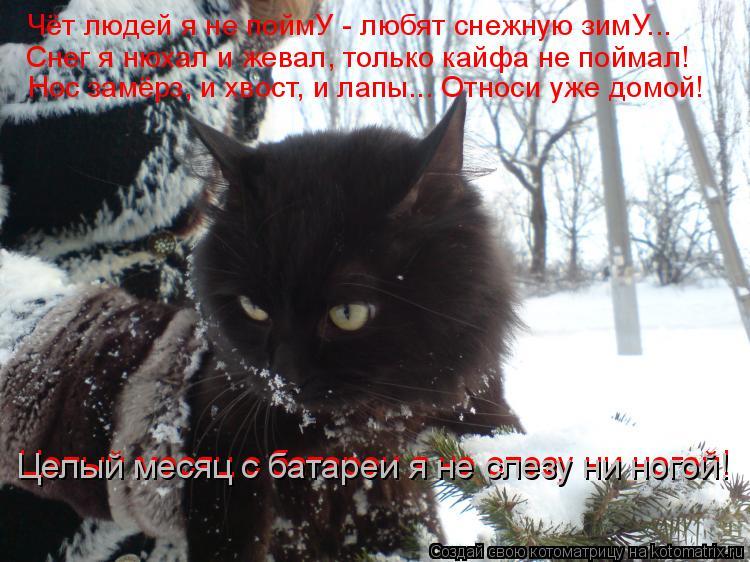 Котоматрица: Чёт людей я не поймУ - любят снежную зимУ... Снег я нюхал и жевал, только кайфа не поймал! Нос замёрз, и хвост, и лапы... Относи уже домой! Целый м