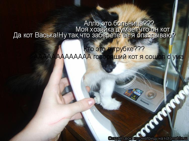 Котоматрица: Алло,это больница??? Моя хозяйка думает,что он кот Кто это в трубке??? Да кот Васька!Ну так,что заберёте ее я опаздываю? ААААААААААААА говоряши