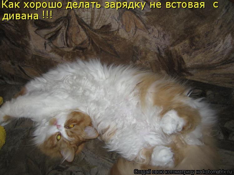 Котоматрица: Как хорошо делать зарядку не встовая  с  дивана !!!