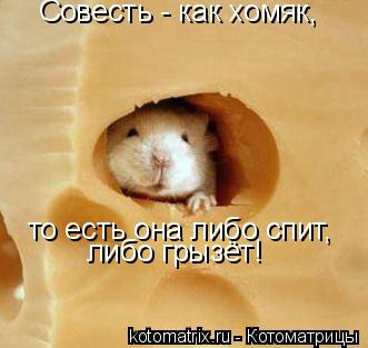 Котоматрица: Совесть - как хомяк, то есть она либо спит, либо грызёт!