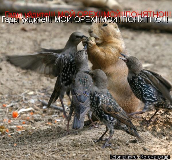 Котоматрица: Гады уйдите!!! МОЙ ОРЕХ!!МОЙ!!ПОНЯТНО!!! Гады уйдите!!! МОЙ ОРЕХ!!МОЙ!!ПОНЯТНО!!!