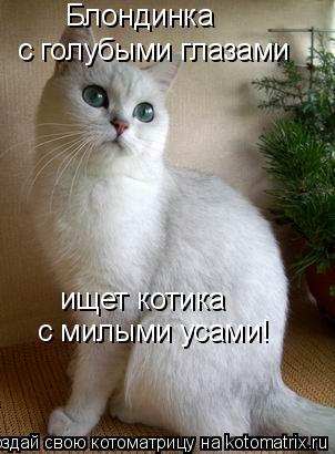 Котоматрица: Блондинка с голубыми глазами ищет котика с милыми усами!