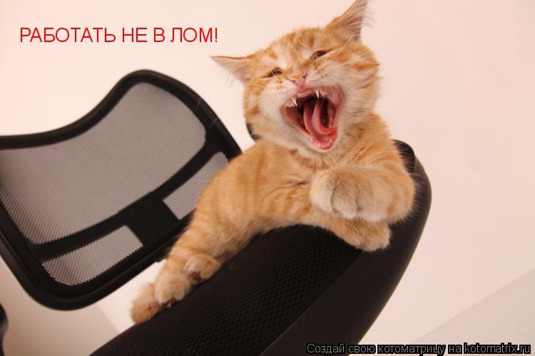 Котоматрица: РАБОТАТЬ НЕ В ЛОМ!