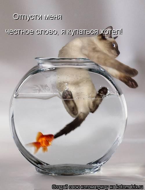 Котоматрица: Отпусти меня честное слово, я купаться хотел!