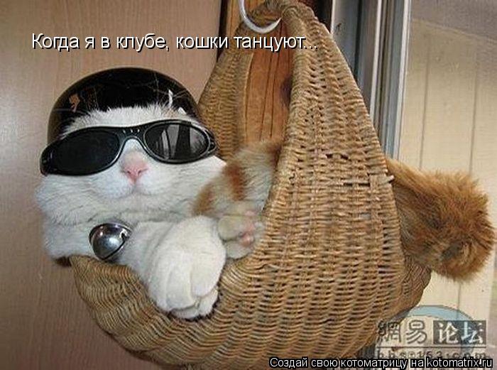 Котоматрица: Когда я в клубе, кошки танцуют...