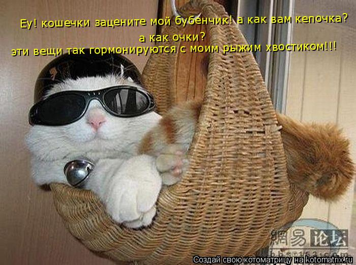 Котоматрица: Еу! кошечки зацените мой бубенчик! а как вам кепочка?  а как очки? эти вещи так гормонируются с моим рыжим хвостиком!!!