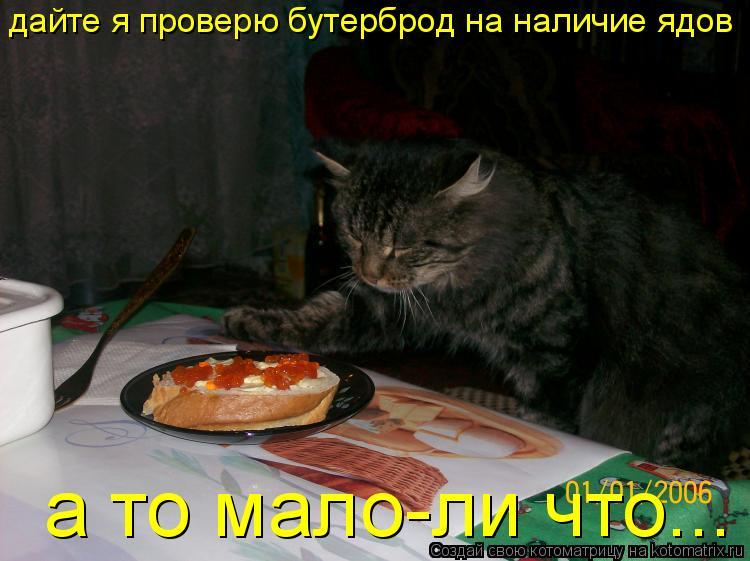 Котоматрица: дайте я проверю бутерброд на наличие ядов а то мало-ли что...