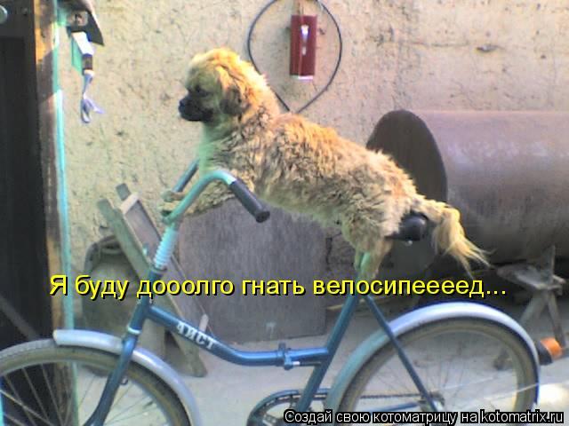 Котоматрица: Я буду дооолго гнать велосипеееед...