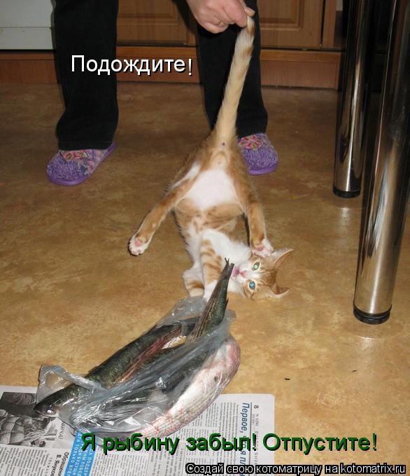 Котоматрица: Подождите Я рыбину забыл! Отпустите! !