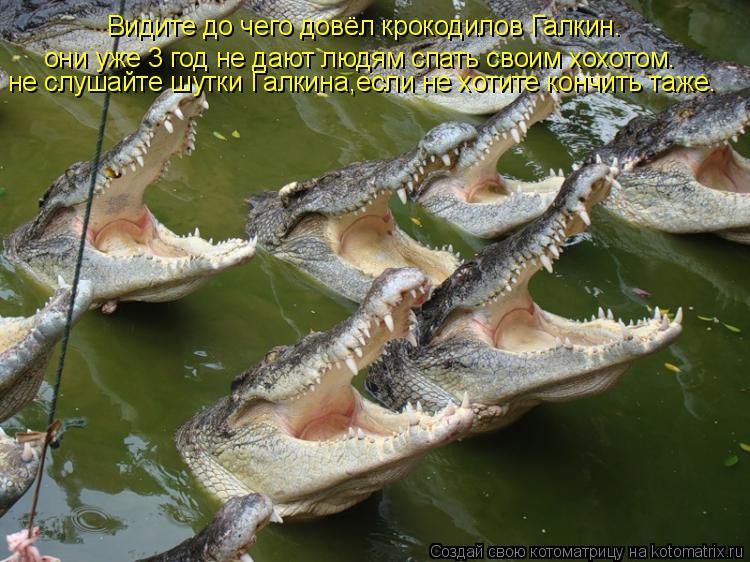 Котоматрица: Видите до чего довёл крокодилов Галкин. они уже 3 год не дают людям спать своим хохотом. не слушайте шутки Галкина,если не хотите кончить таж