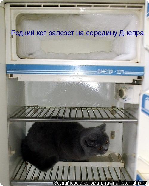 Котоматрица: Редкий кот залезет на середину Днепра