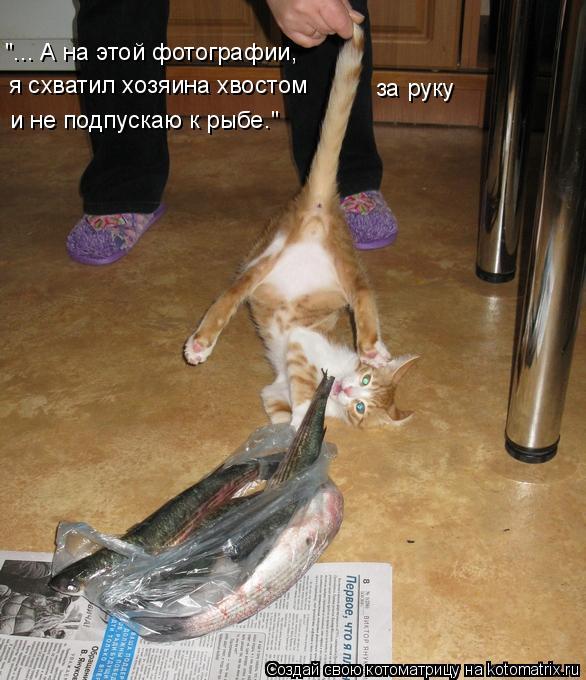 """Котоматрица: """"... А на этой фотографии,  я схватил хозяина хвостом за руку и не подпускаю к рыбе."""""""