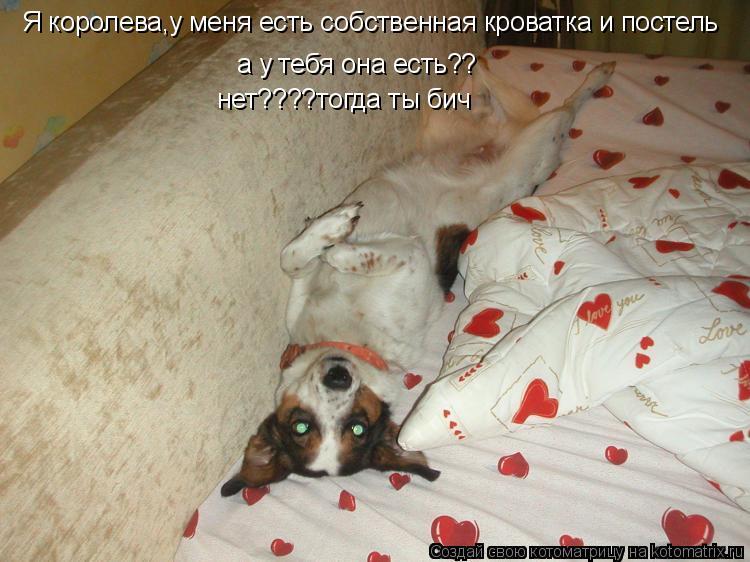 Котоматрица: Я королева,у меня есть собственная кроватка и постель а у тебя она есть?? нет????тогда ты бич