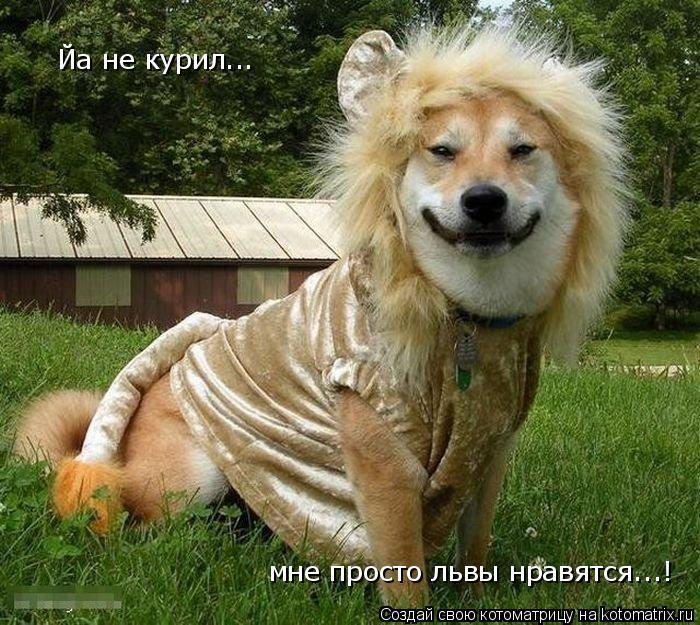 Котоматрица: Йа не курил...  мне просто львы нравятся...!