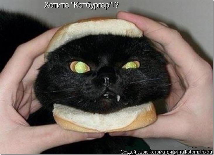 "Котоматрица: Хотите ""Котбургер""!?"