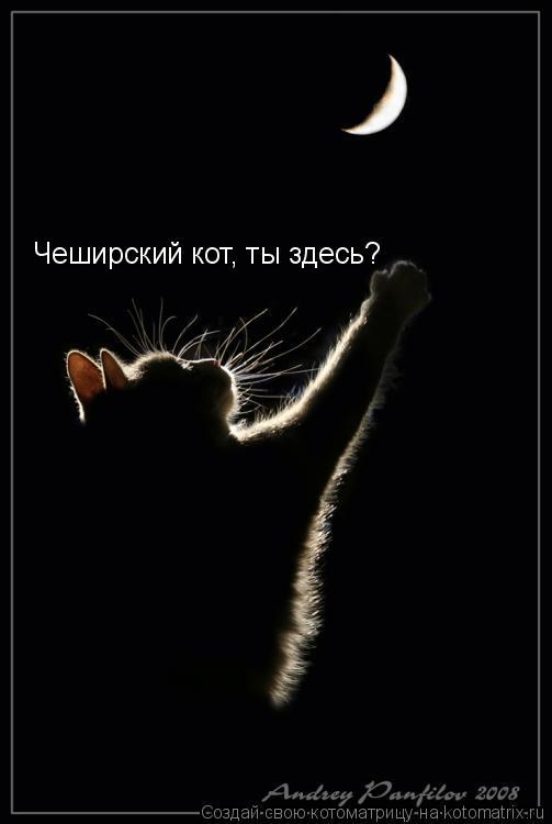 Котоматрица: Чеширский кот, ты здесь?