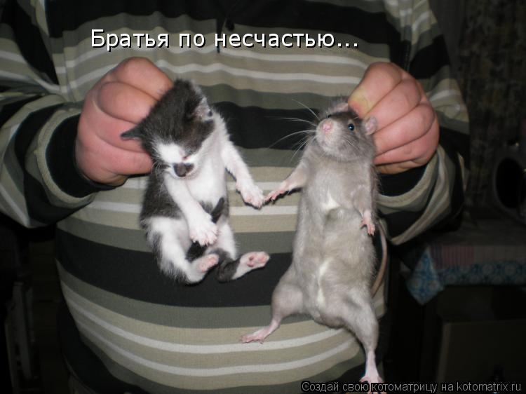 Котоматрица: Братья по несчастью...