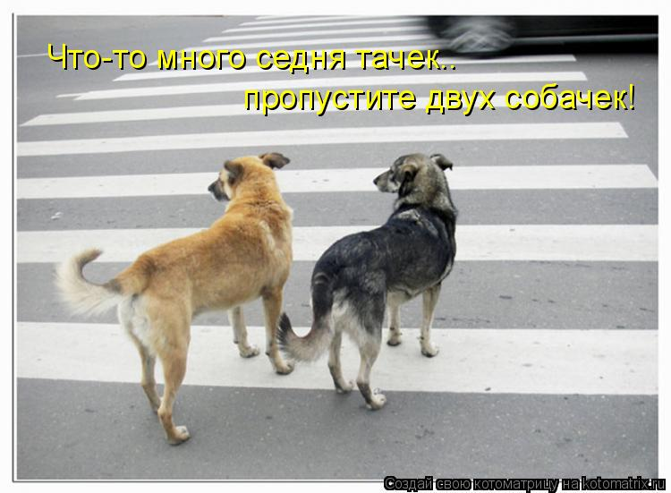 Котоматрица: Что-то много седня тачек.. пропустите двух собачек!