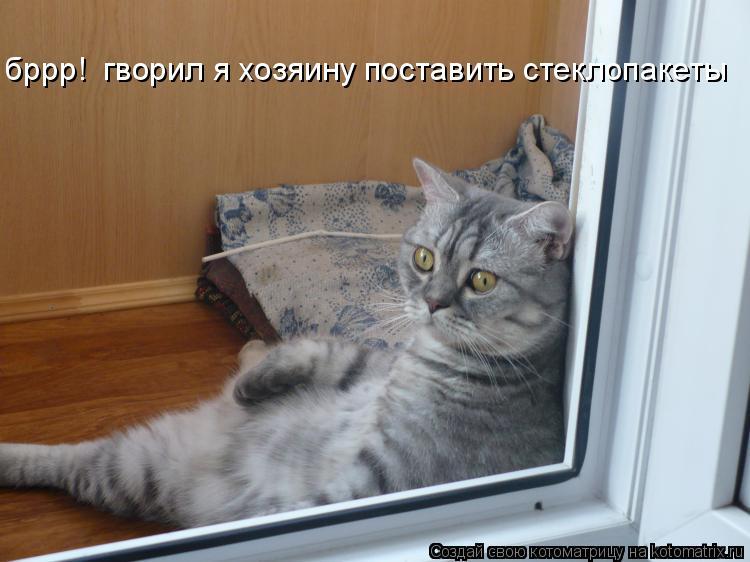 Котоматрица: бррр!  гворил я хозяину поставить стеклопакеты бррр!  гворил я хозяину поставить стеклопакеты