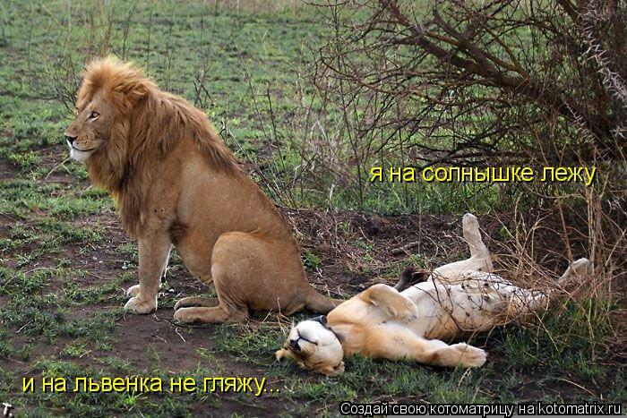 Котоматрица: я на солнышке лежу и на львенка не гляжу...