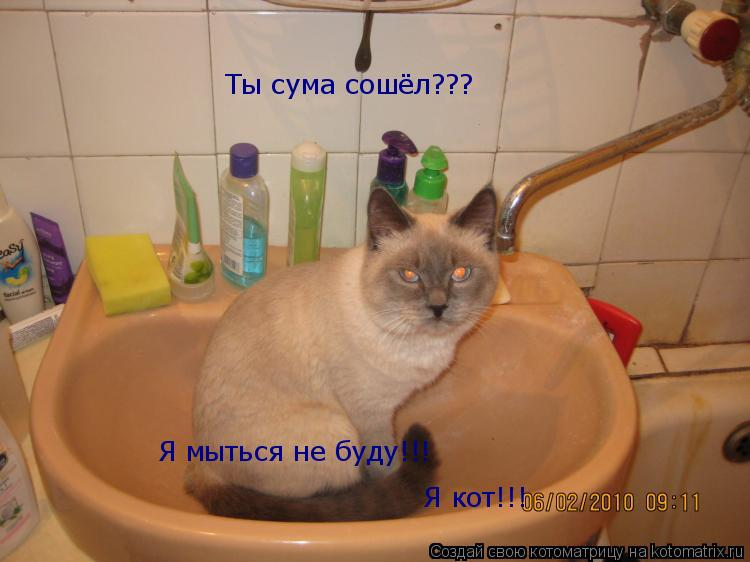 Котоматрица: Ты сума сошёл??? Я мыться не буду!!! Я кот!!!