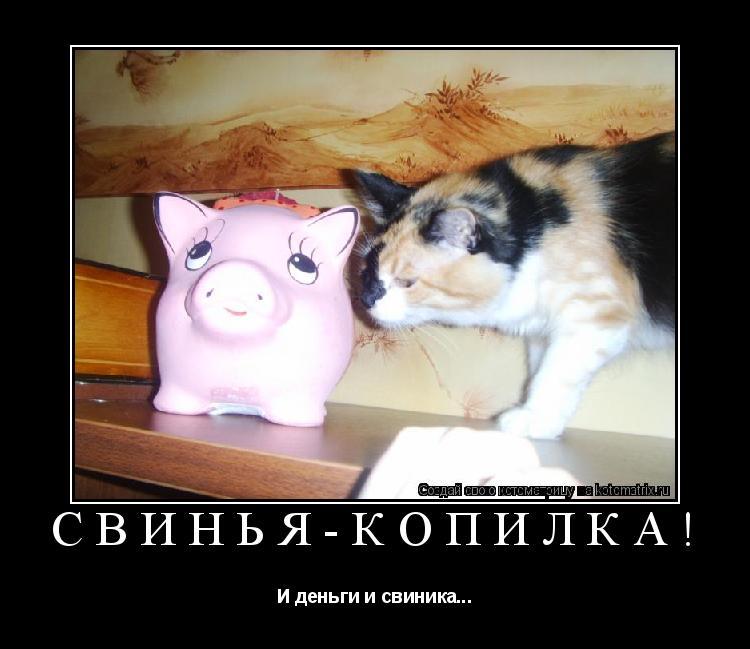 Котоматрица: Свинья-копилка! И деньги и свиника...