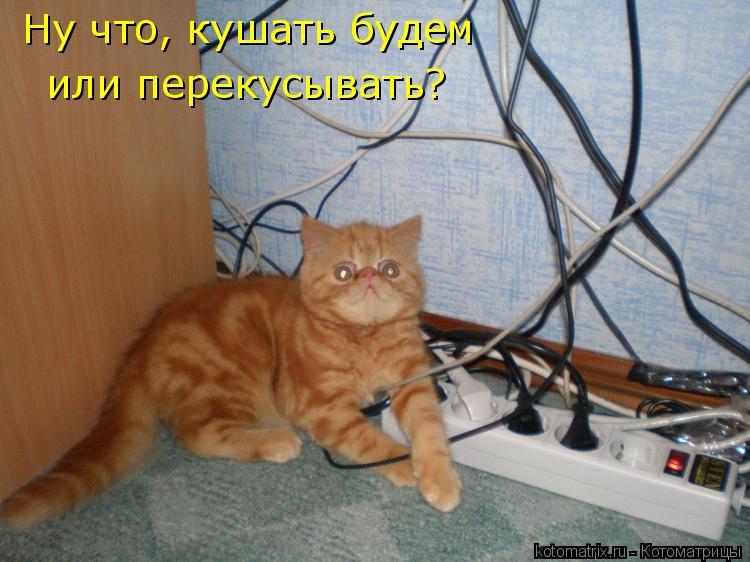 Котоматрица: Ну что, кушать будем  или перекусывать?