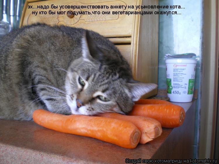 Котоматрица: эх...надо бы усовершенствовать анкету на усыновление кота... ну кто бы мог подумать,что они вегетарианцами окажутся...