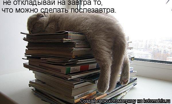 Котоматрица: не откладывай на завтра то, что можно сделать послезавтра.