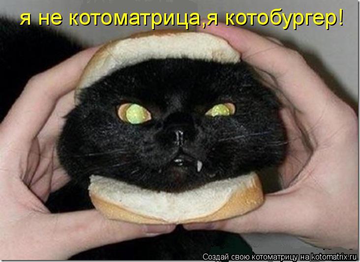 Котоматрица: я не котоматрица,я котобургер!