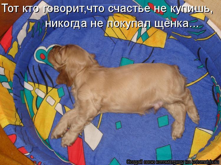 Котоматрица: Тот кто говорит,что счастье не купишь,  никогда не покупал щенка...