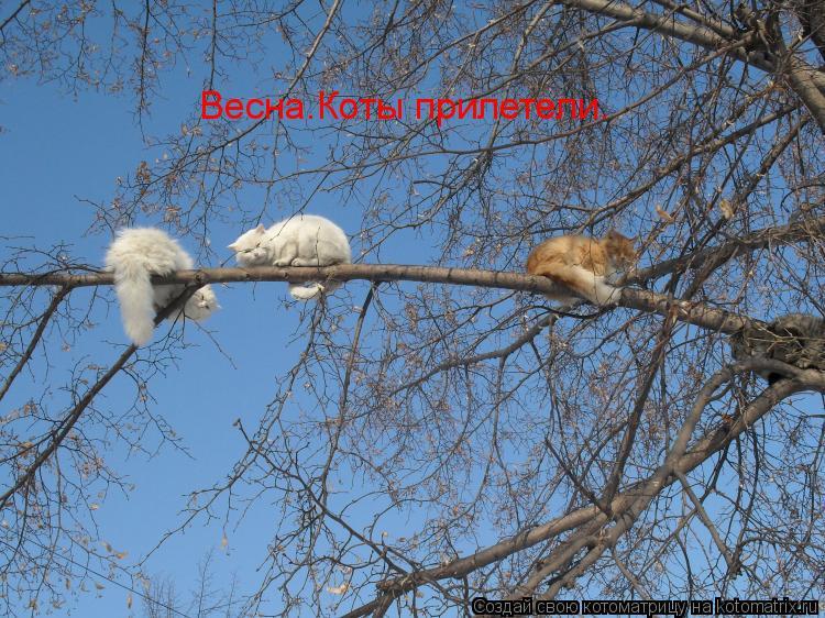 http://kotomatrix.ru/images/lolz/2010/02/09/482029.jpg