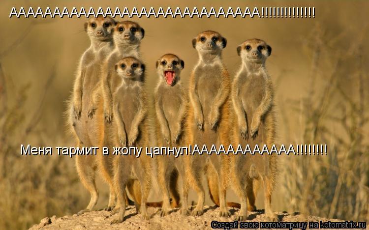 Котоматрица: ААААААААААААААААААААААААААААА!!!!!!!!!!!!!! Меня тармит в жопу цапнул!АААААААААААА!!!!!!!!