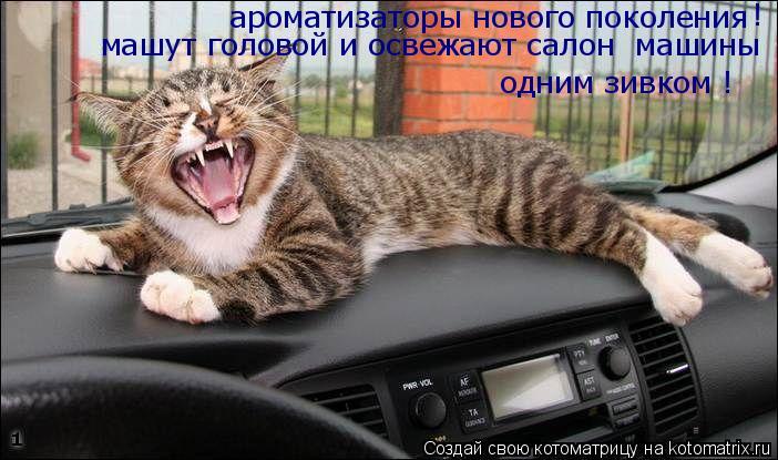 Котоматрица: ароматизаторы нового поколения машут головой и освежают салон  машины одним зивком ! !