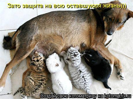 Котоматрица: Зато защита на всю оставшуюся жизнь)))