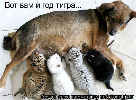 Котоматрица: Вот вам и год тигра...