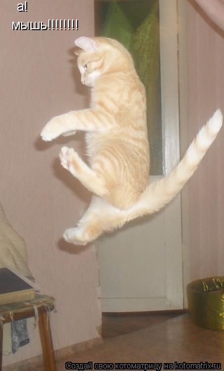 Котоматрица: а! мышь!!!!!!!!